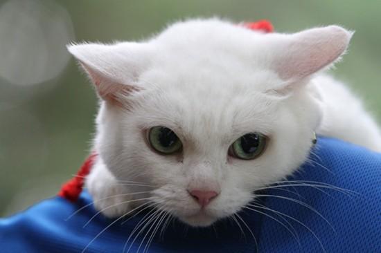 思わず,可愛い,笑った,猫,画像030