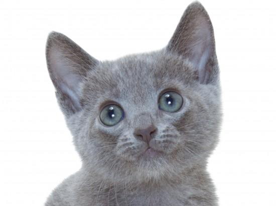 世界,色んな種類,猫,画像030