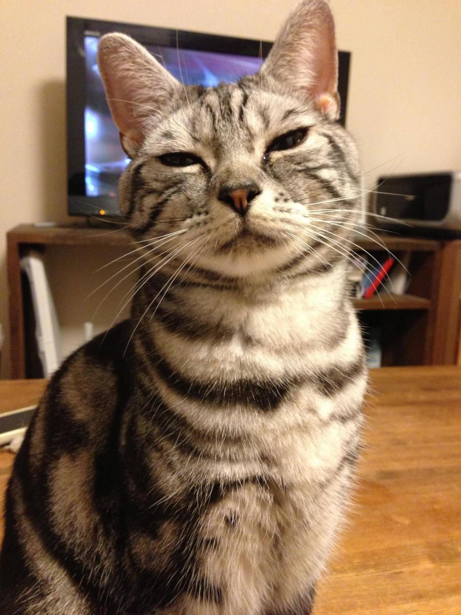 ツンギレ,最強,ジト目,猫,画像031