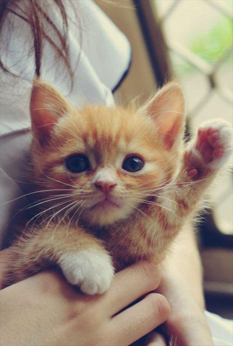 思わず,可愛い,笑った,猫,画像037