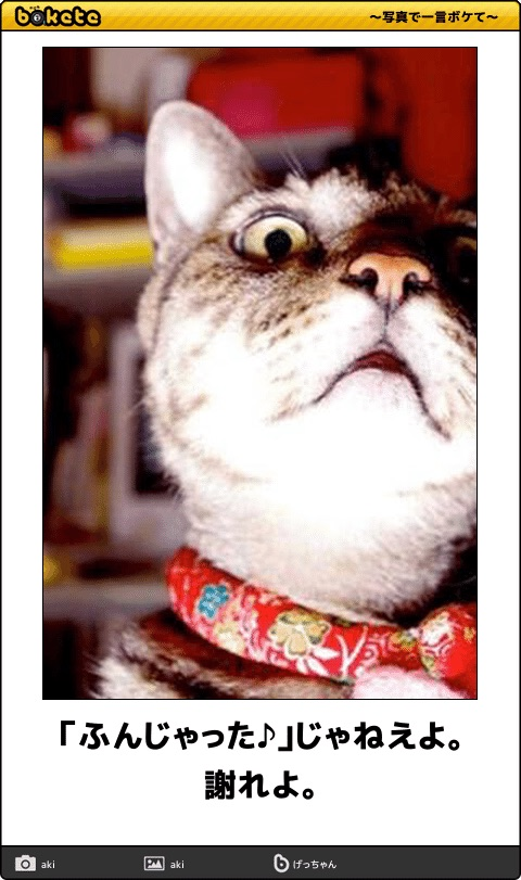 爆笑,可愛く,おもしろい,猫,bokete,画像038