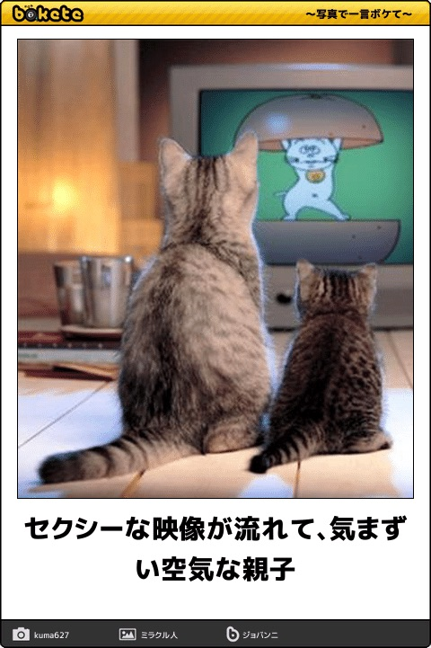 爆笑,可愛く,おもしろい,猫,bokete,画像043