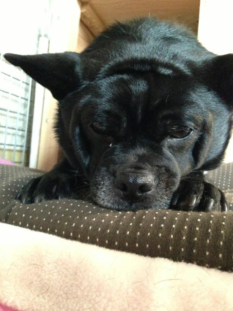 癒される,癒し犬,画像056