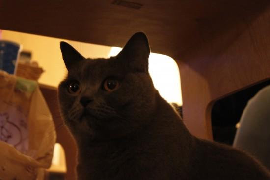 猫カフェ,可愛い,にゃんこ,画像069