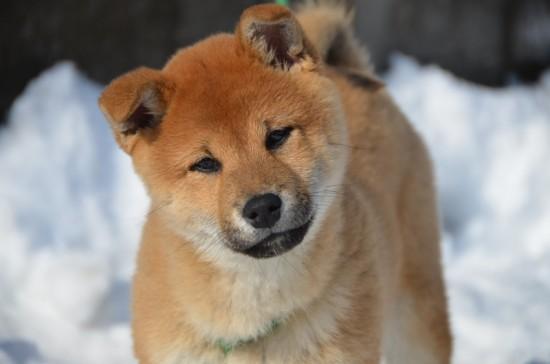癒される,癒し犬,画像071
