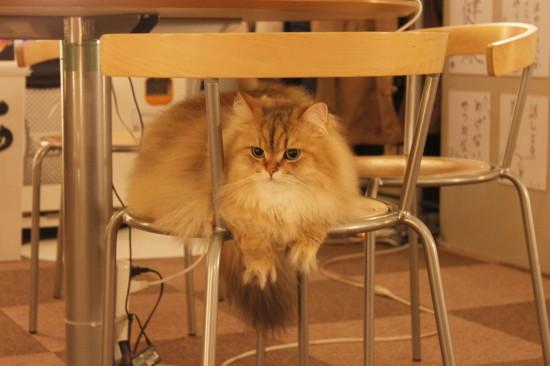 猫カフェ,可愛い,にゃんこ,画像072