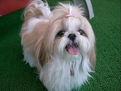 癒される,癒し犬,画像072
