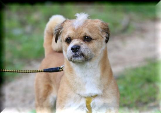 癒される,癒し犬,画像073