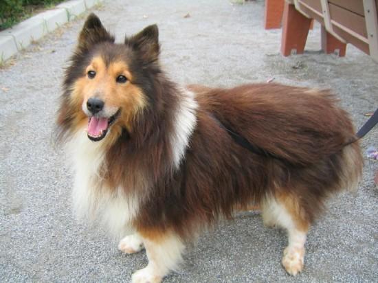 癒される,癒し犬,画像075