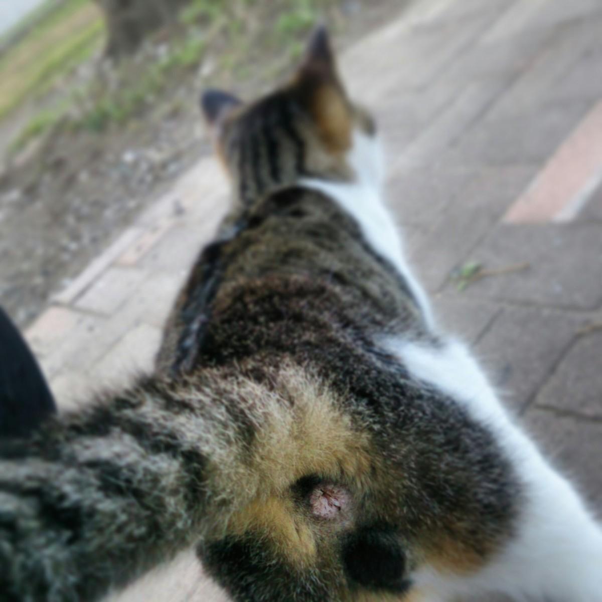 ワイルド,育つ,外猫,画像,091