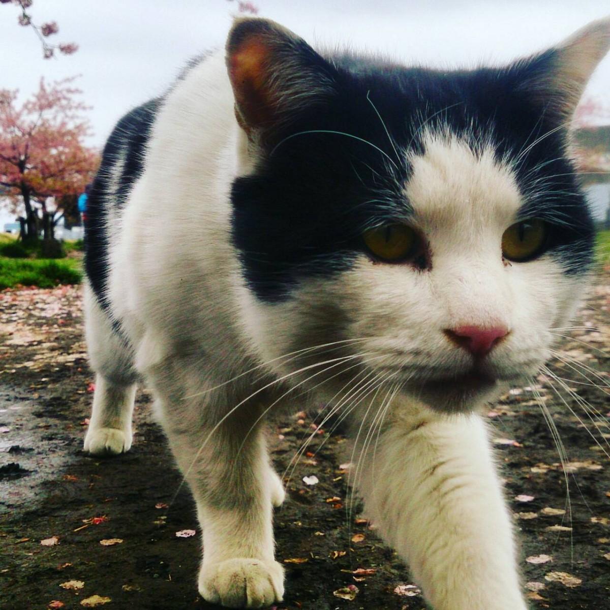 ワイルド,育つ,外猫,画像,094