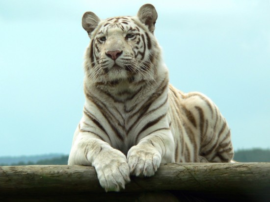 神秘的,アルビノ,白,アルビニズム,黒,動物,画像-12