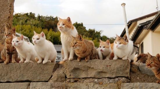 ねこ島,自由,生きる,猫,画像-6