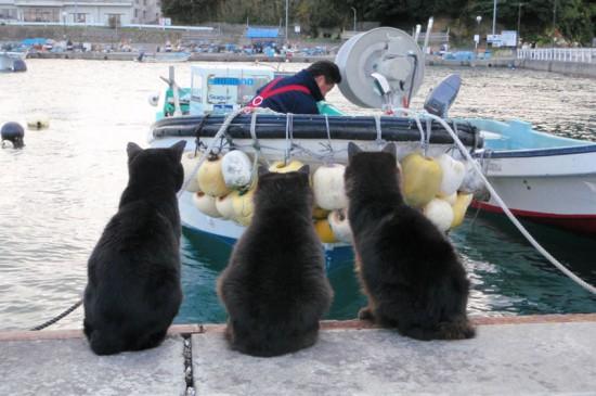 ねこ島,自由,生きる,猫,画像-8