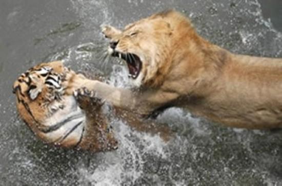 本能,剥き出し,命をかけた,動物たち,戦い,画像001