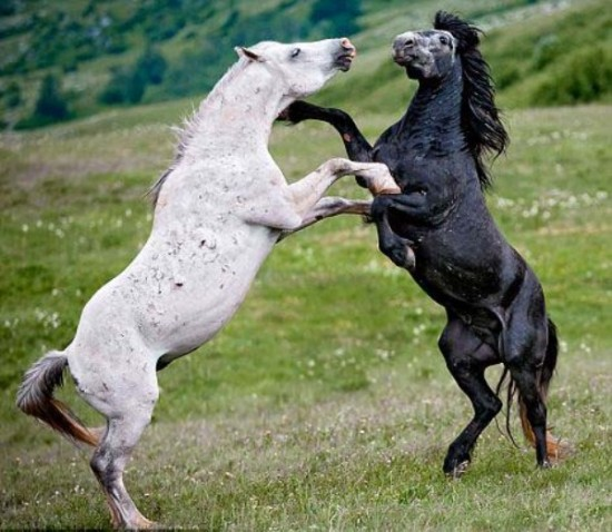 本能,剥き出し,命をかけた,動物たち,戦い,画像003
