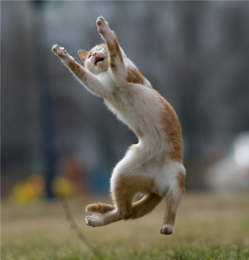 プッ,可愛さ,抜群,面白,猫,画像003