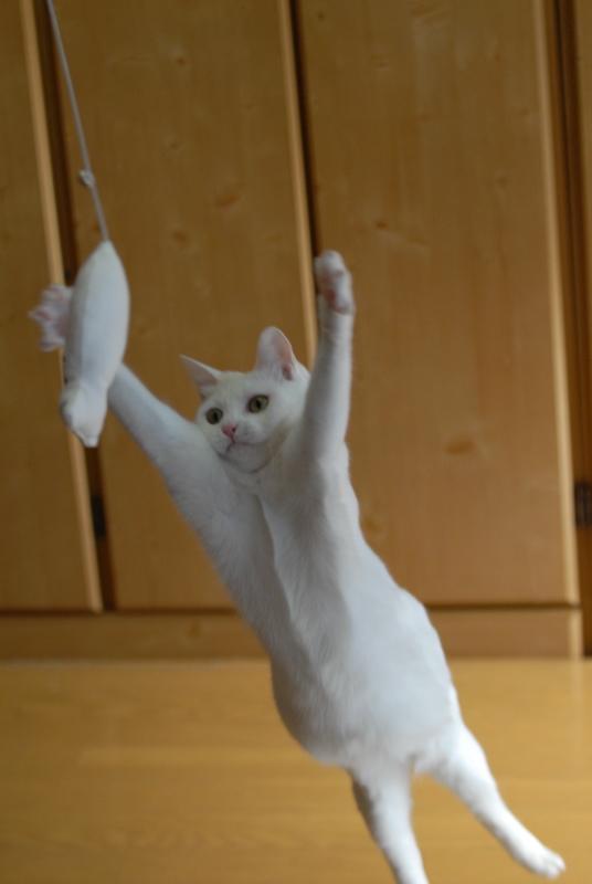 プッ,可愛さ,抜群,面白,猫,画像004