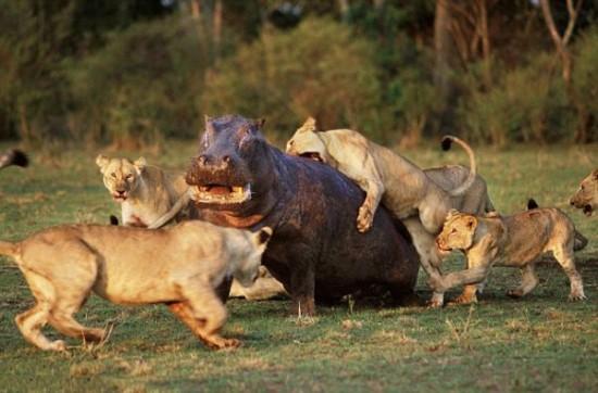 本能,剥き出し,命をかけた,動物たち,戦い,画像005