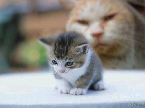 プッ,可愛さ,抜群,面白,猫,画像006