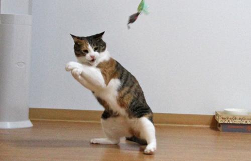 プッ,可愛さ,抜群,面白,猫,画像008