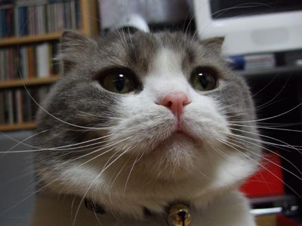 プッ,可愛さ,抜群,面白,猫,画像009