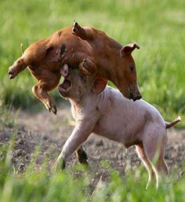 本能,剥き出し,命をかけた,動物たち,戦い,画像011