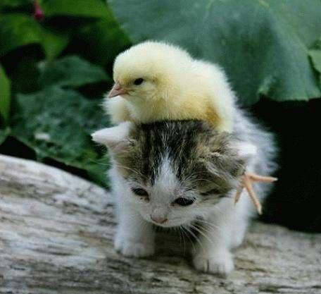 プッ,可愛さ,抜群,面白,猫,画像011