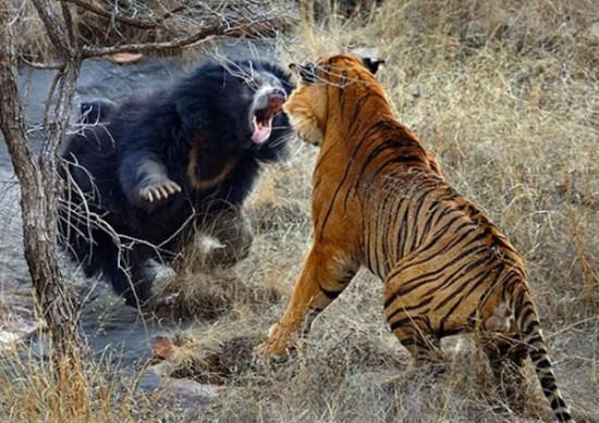 本能,剥き出し,命をかけた,動物たち,戦い,画像012