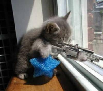 プッ,可愛さ,抜群,面白,猫,画像012
