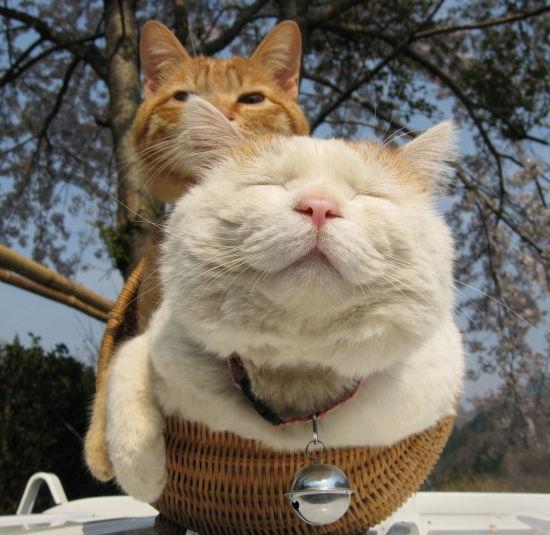 プッ,可愛さ,抜群,面白,猫,画像014