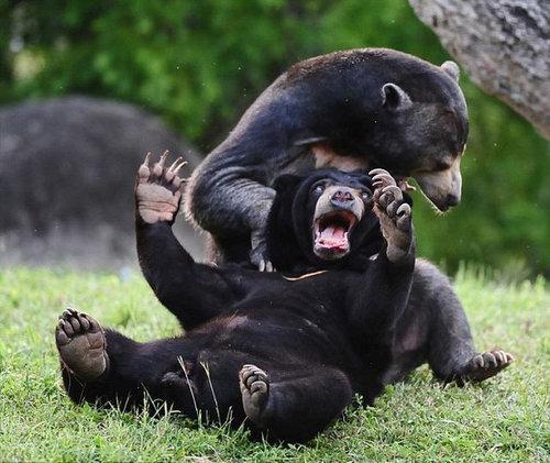 本能,剥き出し,命をかけた,動物たち,戦い,画像015
