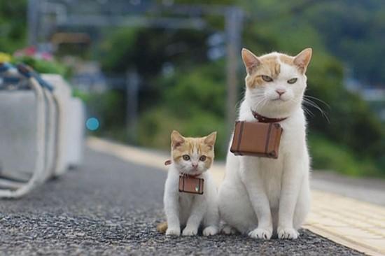 プッ,可愛さ,抜群,面白,猫,画像015