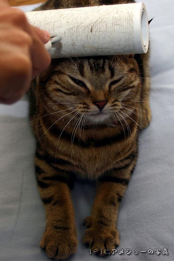 プッ,可愛さ,抜群,面白,猫,画像017