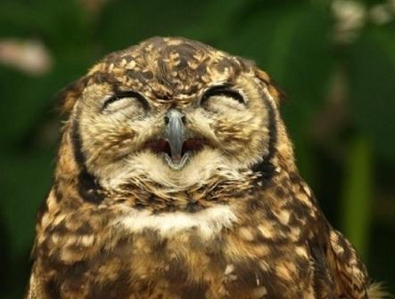 笑顔,動物,画像,爆笑043