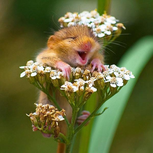 笑顔,動物,画像,爆笑045