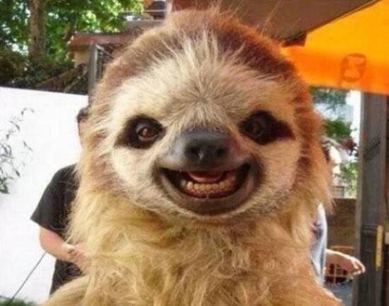 笑顔,動物,画像,爆笑054