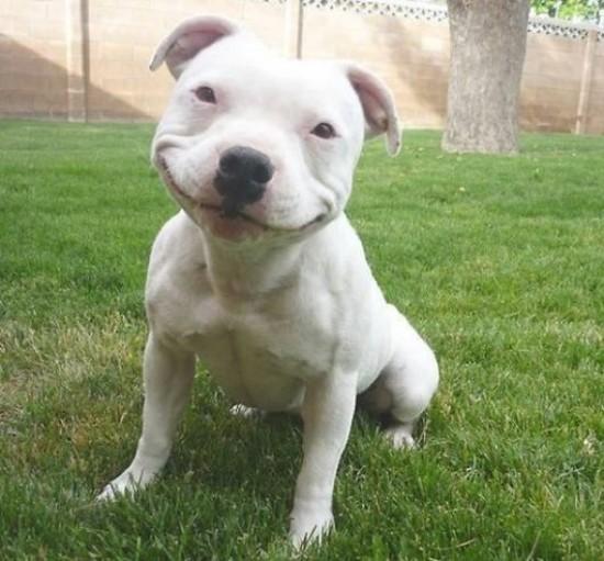 笑顔,動物,画像,爆笑056