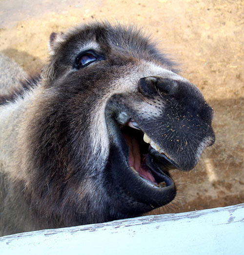 笑顔,動物,画像,爆笑070