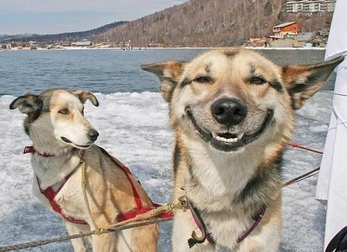 笑顔,動物,画像,爆笑073