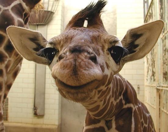 笑顔,動物,画像,爆笑075
