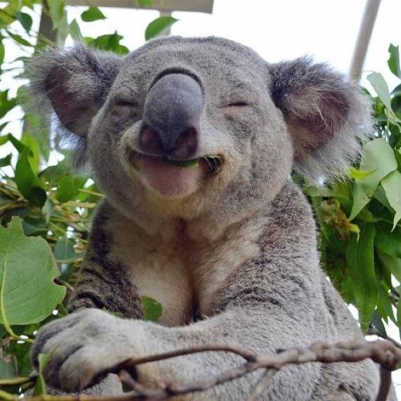 笑顔,動物,画像,爆笑078