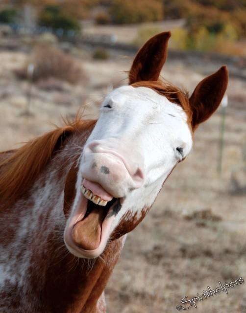 笑顔,動物,画像,爆笑083