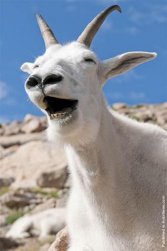 笑顔,動物,画像,爆笑085