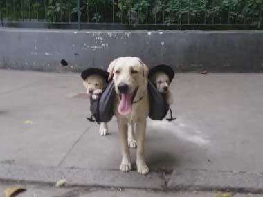 可愛すぎ,袋,鞄,入る,犬,画像-10