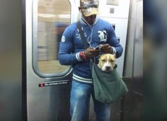可愛すぎ,袋,鞄,入る,犬,画像-11