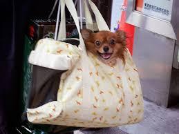可愛すぎ,袋,鞄,入る,犬,画像-12