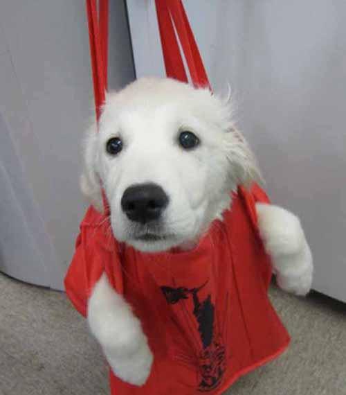 可愛すぎ,袋,鞄,入る,犬,画像-13