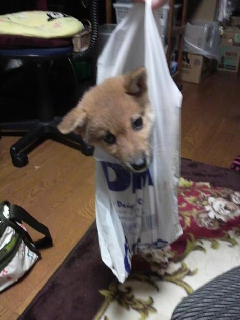 可愛すぎ,袋,鞄,入る,犬,画像-5