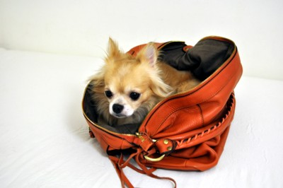 可愛すぎ,袋,鞄,入る,犬,画像-7